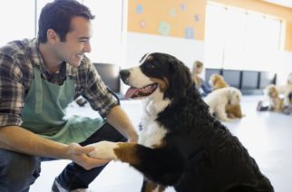 Top Pet-Related Business Ideas For 2017